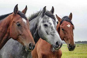馬の毛ブラシ
